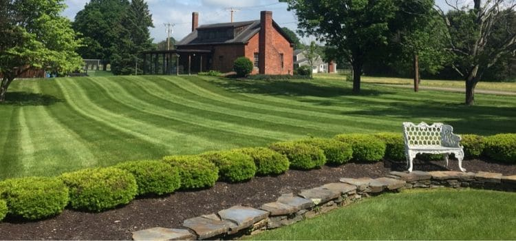 Beautifully mowed lawn in the background with a hedge row and seating bench in the foreground.