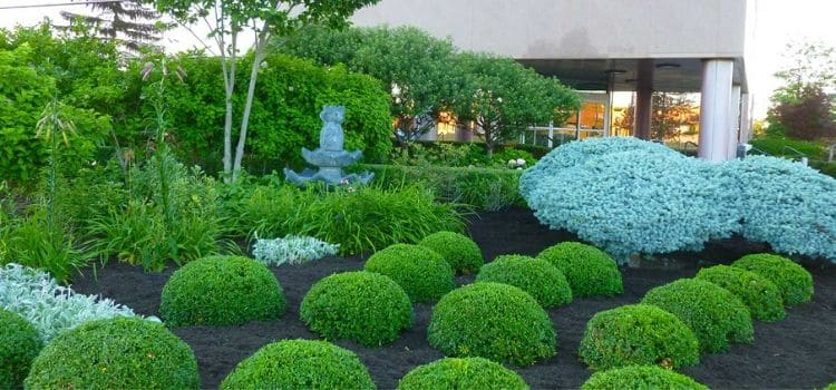 Commercial property with pruned plants in the landscape beds.