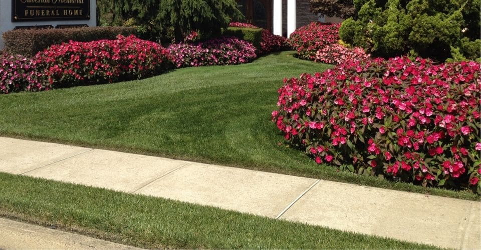 Stunning lawn and landscape at the entrance of a business.