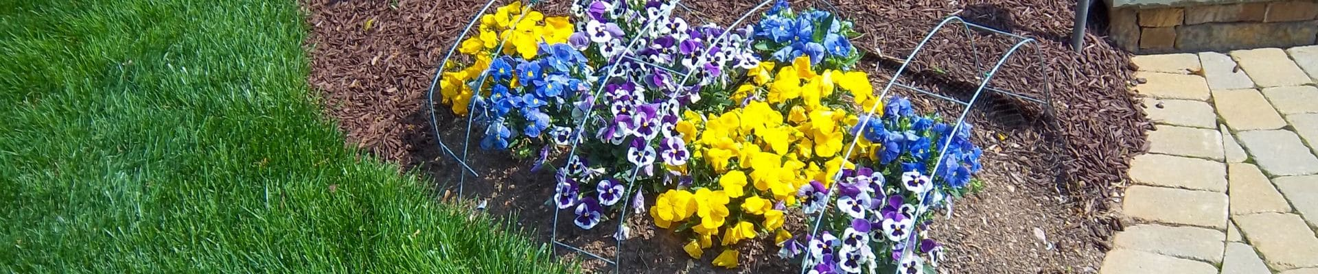 Seasonal flowers with protective cage installed by ECM Landscaping and Lawn Care.