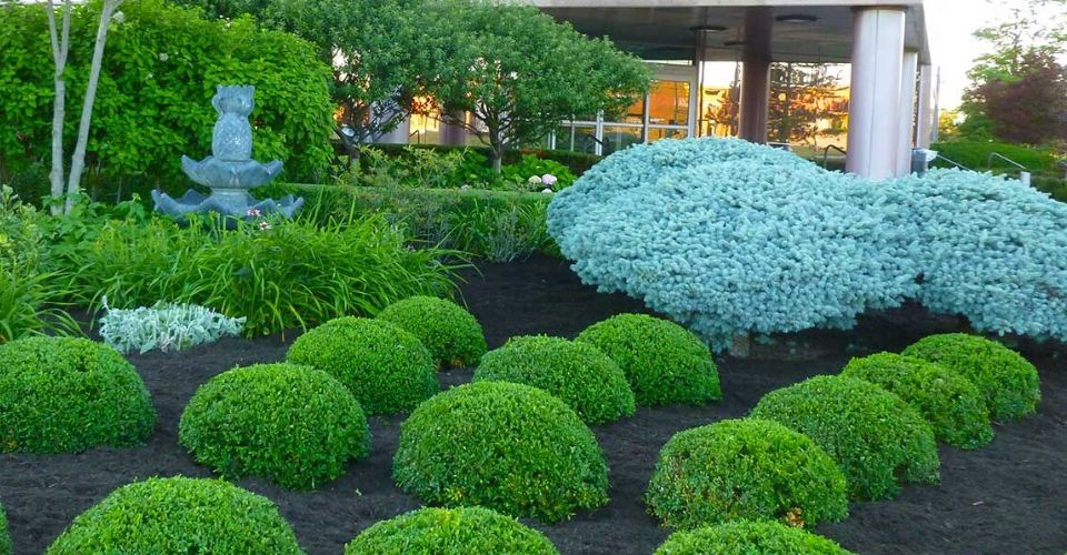 Perfectly maintained commercial landscape bed.