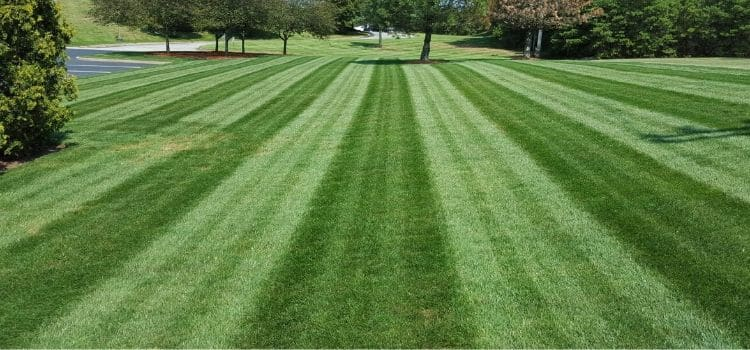 Perfect stripes in a large lawn.