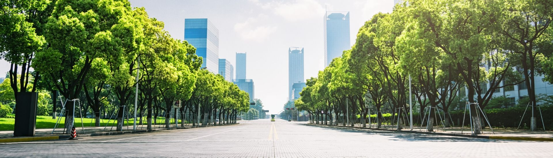 Tree lined paver road with sky scraper buildings in the background.
