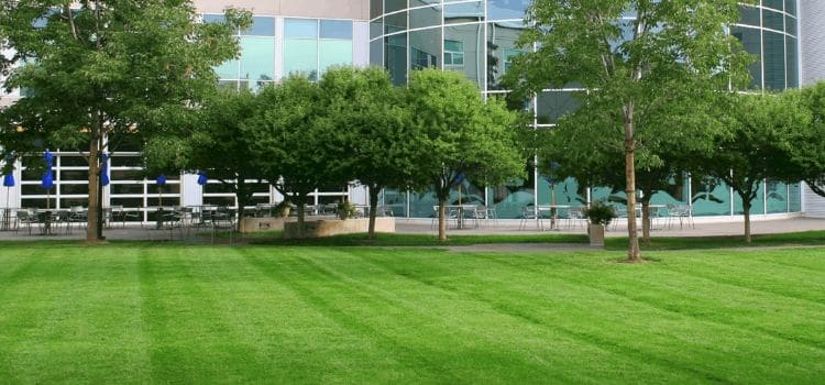 Commercial property with a weed-free, green, healthy lawn with trees and building in the back.