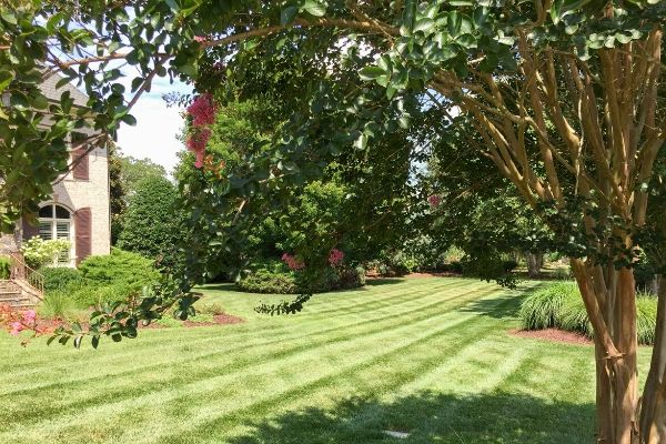 Professionally mowed lawn with tree branches and leaves overhanging.