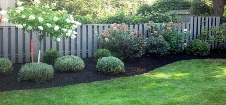 Black mulch looking great in a landscape bed with healthy plants.