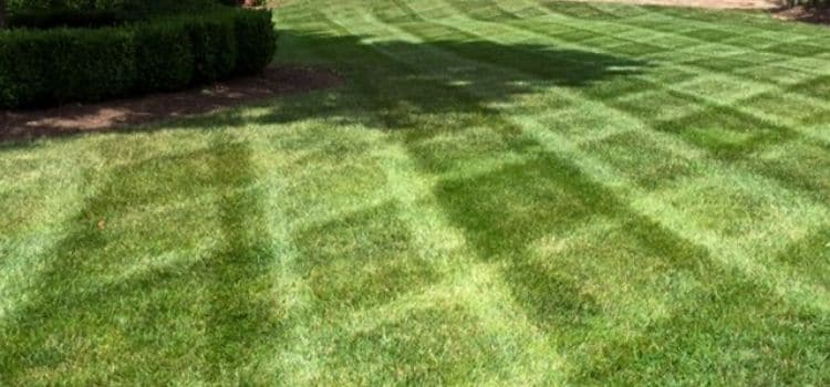 A bright green lawn with fresh lawn mowing stripes.