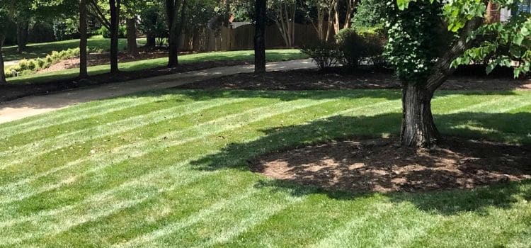 Back yard with recently mowed lawn.