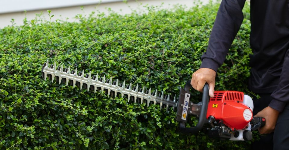 Hedge trimmer pruning a hedge row.