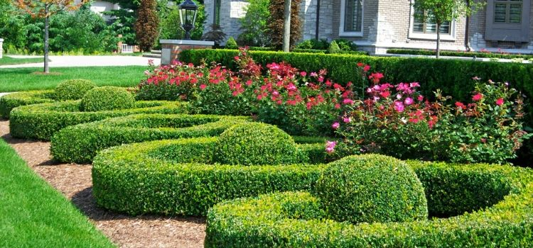 Perfectly pruned hedge row in a detailed landscaping bed.