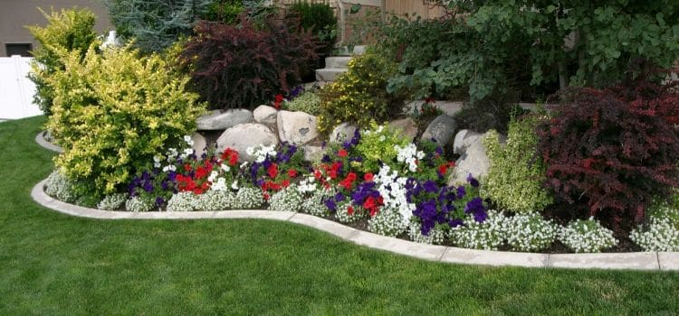 Spring annual flowers making this landscape bed pop!